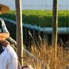 Huacho: Ciclo Cine Iberoamericano