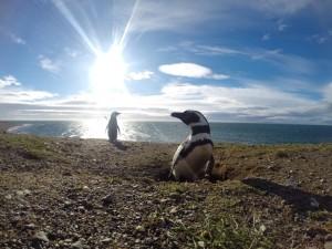 Chile en el lente, Punta Arenas 2do lugar